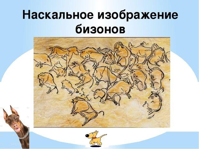 Наскальное изображение бизонов