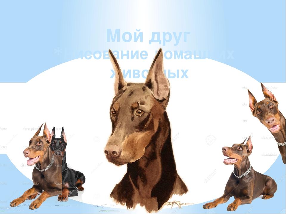 Рисование домашних животных Мой друг