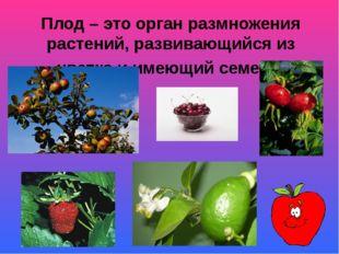 Плод – это орган размножения растений, развивающийся из цветка и имеющий семе