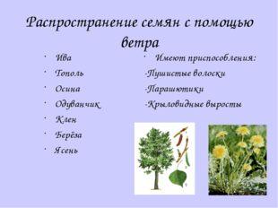 Распространение семян с помощью ветра Ива Тополь Осина Одуванчик Клен Берёза