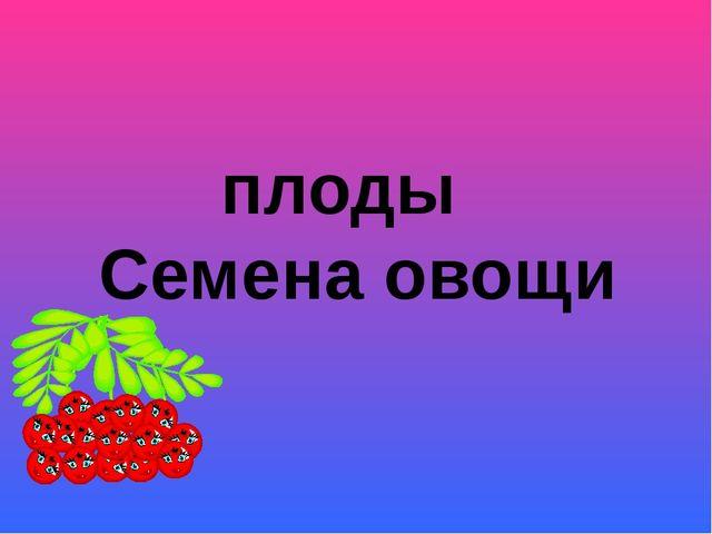 плоды Семена овощи