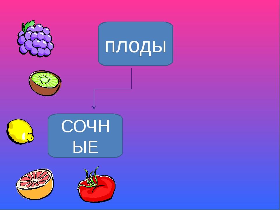 плоды СОЧНЫЕ