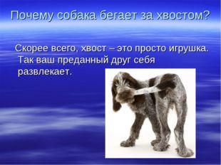 Почему собака бегает за хвостом? Скорее всего, хвост – это просто игрушка. Та