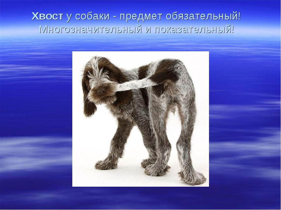 Хвосту собаки - предмет обязательный! Многозначительный и показательный!