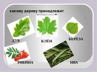 какому дереву принадлежит  листочек ? ДУБ КЛЁН БЕРЁЗА РЯБИНА ИВА