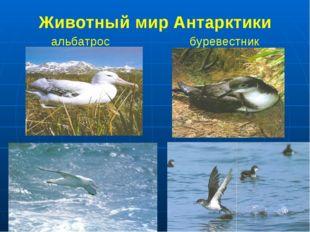 Животный мир Антарктики альбатрос буревестник