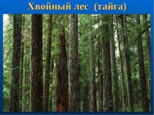 Хвойный лес (тайга)