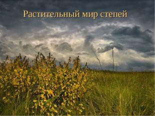 Растительный мир степей