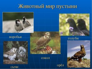 Животный мир пустыни воробьи сычи голуби сокол орёл
