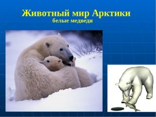 белые медведи Животный мир Арктики