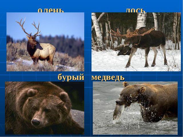 олень лось бурый медведь