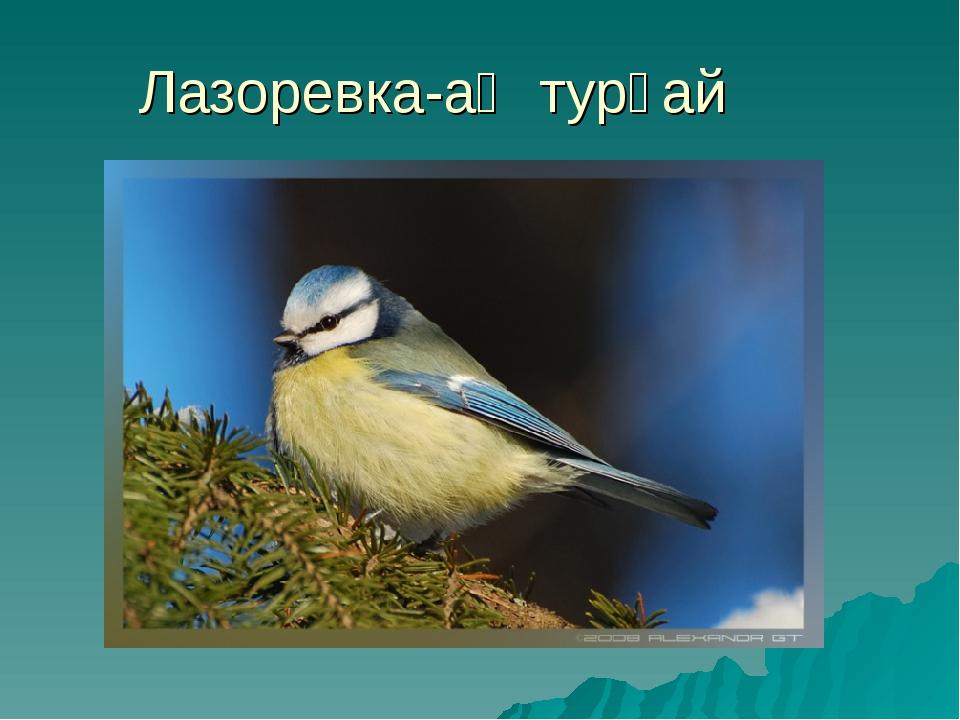 Лазоревка-аҡ турғай