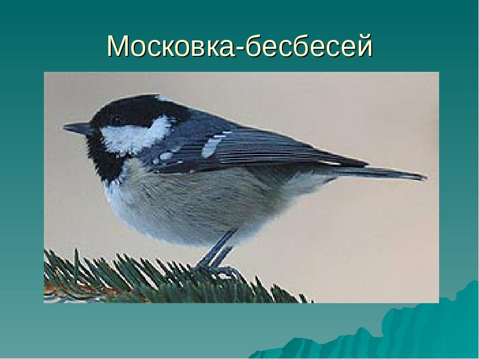 Московка-бесбесей