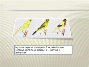Мутации окраски у канареек: 2 — дикий тип — зелёная; мутантные формы: 1 — жёл