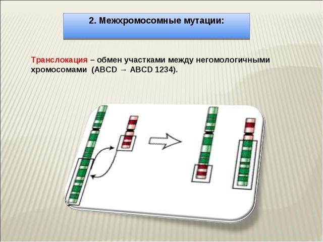 2. Межхромосомные мутации: Транслокация – обмен участками между негомологичны...
