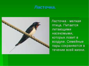 Ласточка. Ласточка - мелкая птица. Питается летающими насекомыми, которых лов