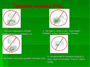 Правила охраны птиц. Нельзя подходить близко к гнёздам птиц и разорять их. 2