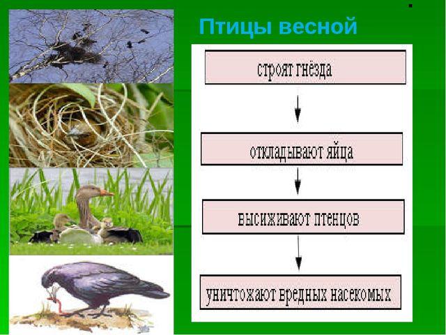 . Птицы весной