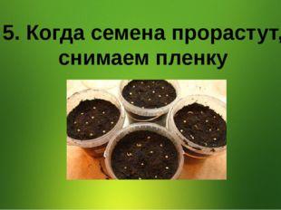 5. Когда семена прорастут, снимаем пленку