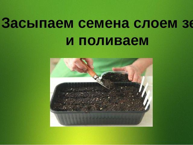 3. Засыпаем семена слоем земли и поливаем