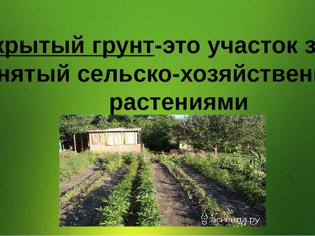 Открытый грунт-это участок земли, занятый сельско-хозяйственными растениями