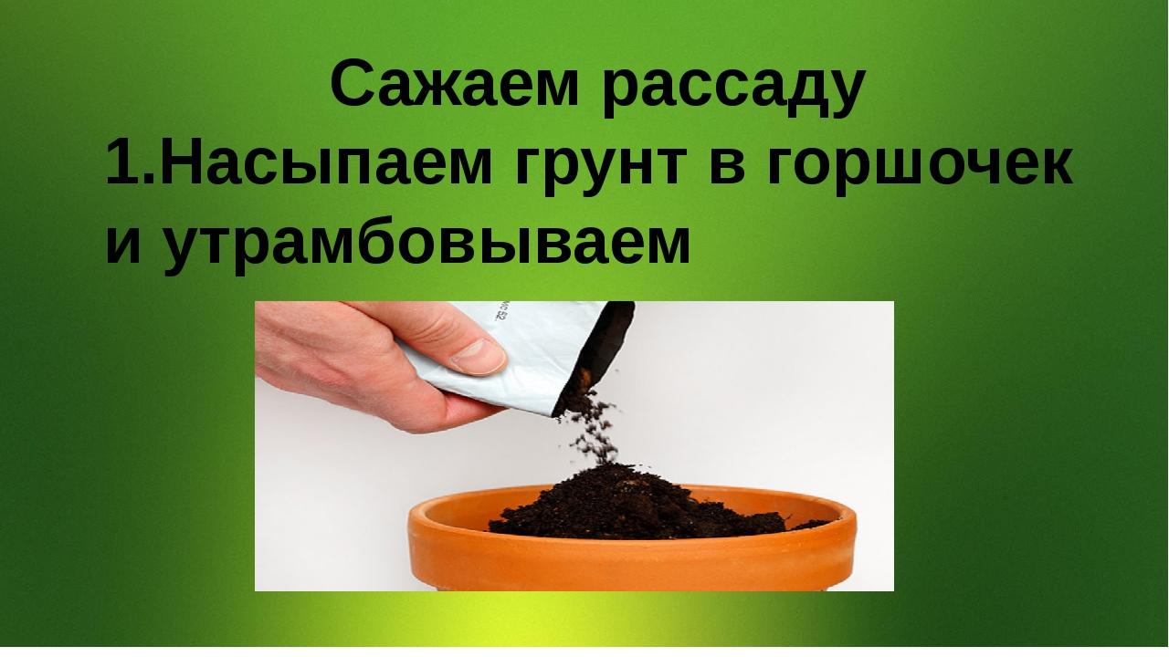Сажаем рассаду 1.Насыпаем грунт в горшочек и утрамбовываем