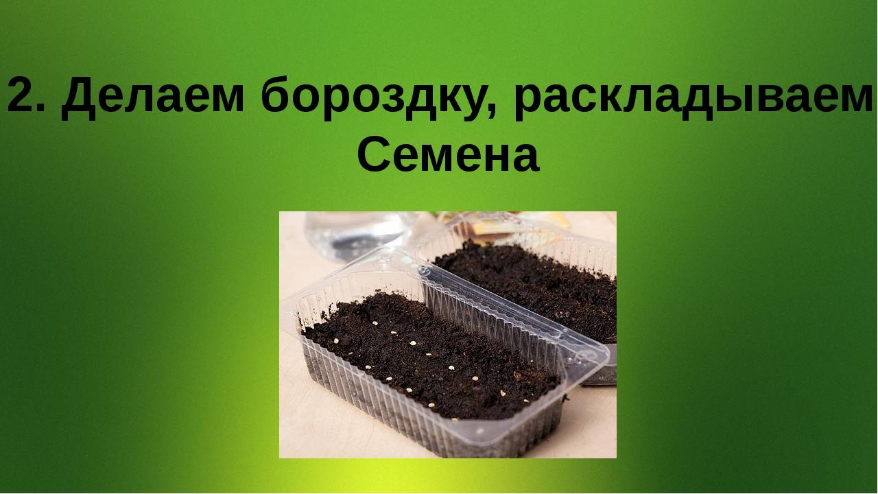 2. Делаем бороздку, раскладываем Семена