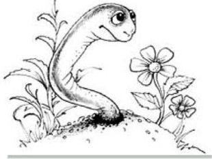 Көбеюі шұбалшаң Қосжынысты, яғни гермафродитті, пілдесі болады Нереида және қ