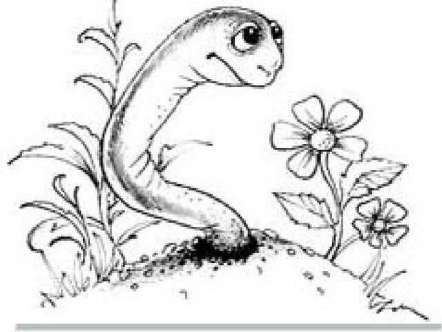 Сезім мүшелері шұбалшаң Топырақта тіршілік етуіне байланысты жақсы дамымамаға...