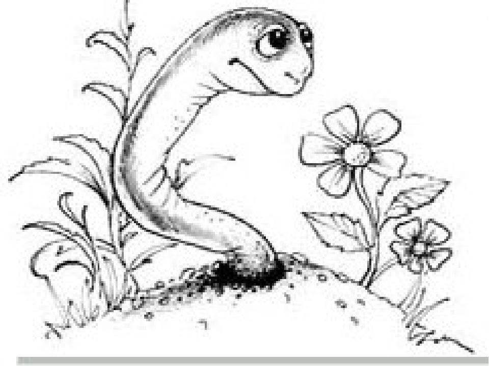 Зәр шығаруы шұбалшаң Әрбір буылтығында екі екіден орналасқан кішкене ақ имек...