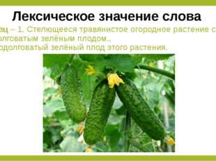 Огурец – 1. Стелющееся травянистое огородное растение с продолговатым зелёным