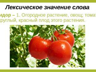 Помидор – 1. Огородное растение, овощ; томат. 2. Округлый, красный плод этого
