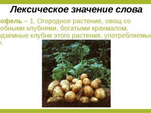 Картофель – 1. Огородное растение, овощ со съедобными клубнями, богатыми крах