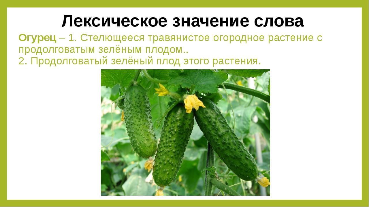 Огурец – 1. Стелющееся травянистое огородное растение с продолговатым зелёным...