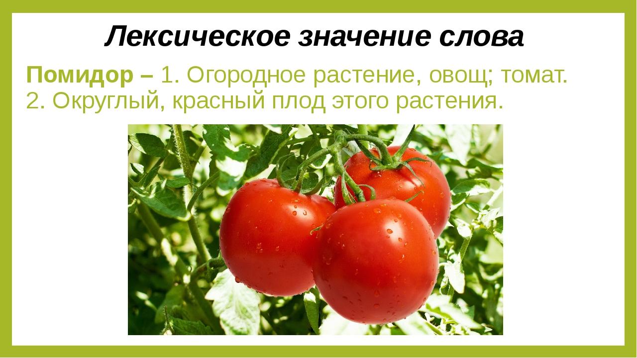 Помидор – 1. Огородное растение, овощ; томат. 2. Округлый, красный плод этого...