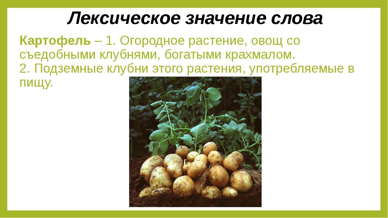 Картофель – 1. Огородное растение, овощ со съедобными клубнями, богатыми крах...