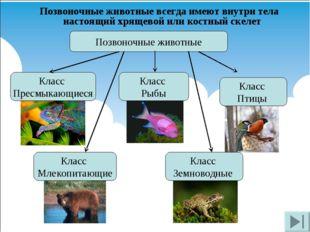 Позвоночные животные всегда имеют внутри тела настоящий хрящевой или костный