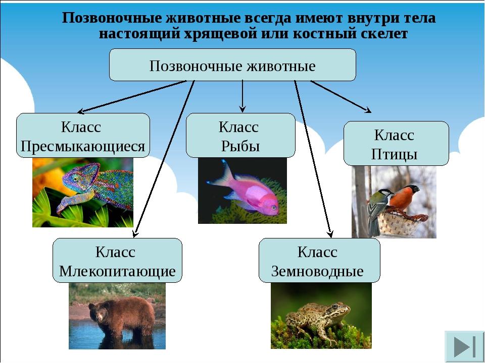 Позвоночные животные всегда имеют внутри тела настоящий хрящевой или костный...
