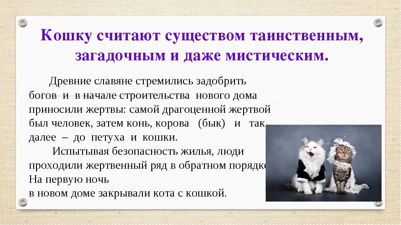 Кошку считают существом таинственным, загадочным и даже мистическим. Древние...