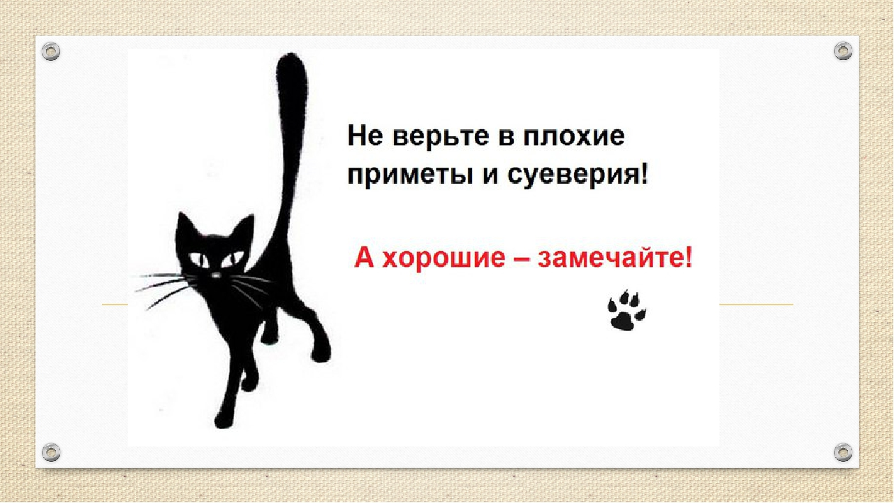 Народные приметы о котах почему гадят в доме в недоступных местах