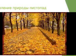 2 явление природы-листопад