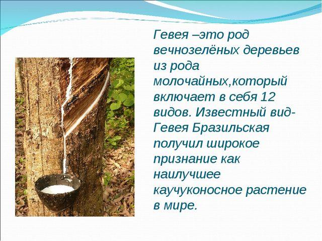 Гевея –это род вечнозелёных деревьев из рода молочайных,который включает в се...