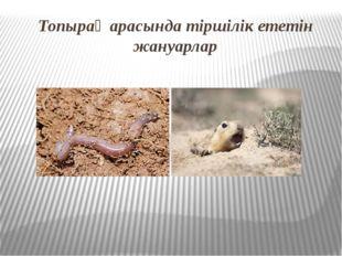 Топырақ арасында тіршілік ететін жануарлар