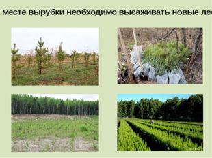 На месте вырубки необходимо высаживать новые леса.