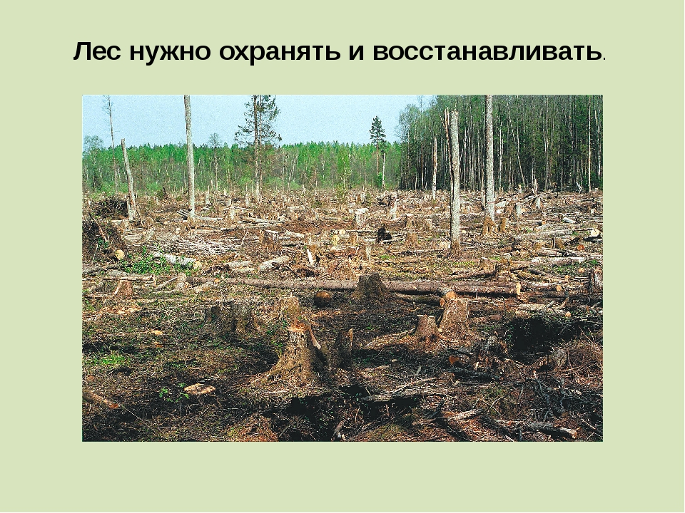 Лес нужно охранять и восстанавливать.