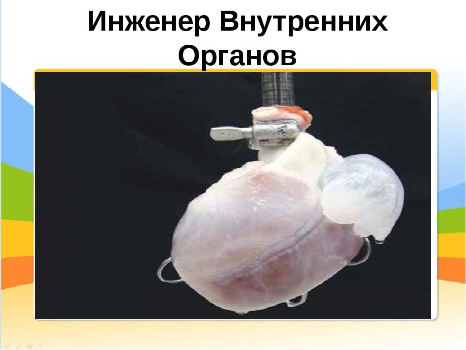 Инженер Внутренних Органов Конструирование искусственных органов