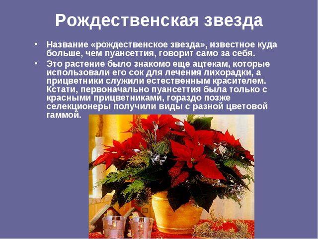 Рождественская звезда Название «рождественское звезда», известное куда больше...