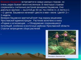 Венерин башмачок встречается в самых разных странах, но очень редко бывает мн