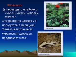 Женьшень (в переводе с китайского «корень жизни, человек-корень» Это растени