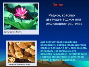 Лотос. Редкое, красиво цветущее водное или околоводное растение Для всех лот